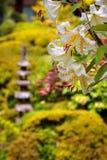 Blomma i Nikko Arkivfoton