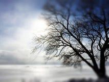 En oskarp kall vinter Fotografering för Bildbyråer