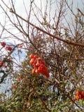 En otoño la caída de las hojas Imagen de archivo