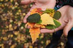 En otoño las hojas dan vuelta amarillo Imagen de archivo libre de regalías