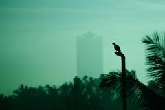 En ottafågel Arkivfoton