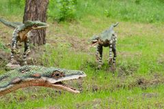 En packe av dinosaurieCoelophysis, modeller, rekonstruktion arkivbilder