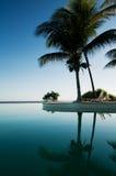 en palmeras piscina reflejadas 免版税库存照片