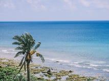 En palmträd i kusten av det tropiska havet Royaltyfria Foton