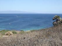En palmträd som ser havet Fotografering för Bildbyråer