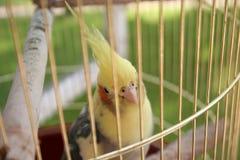 En papegoja Royaltyfri Fotografi