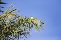 En papegoja i ett träd Arkivbild