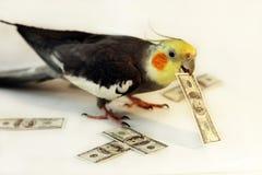 En papegoja med pengarna Royaltyfri Bild