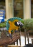En papegoja på den Naples zoo Fotografering för Bildbyråer