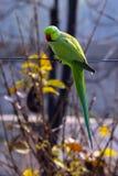En papegoja som ser mig royaltyfri bild