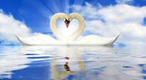 En para av swans arkivfoton