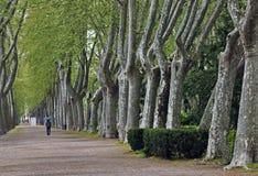 En parkera med högväxta träd på trottoaren Royaltyfria Foton