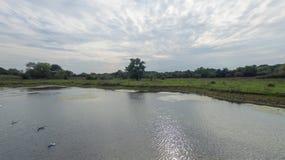 En parkera på sena September, sikt av en sjö på den sena eftermiddagen Royaltyfria Bilder