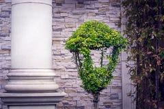 En parkeralykta med en grön buxbom på bakgrunden av en kolonn royaltyfria bilder