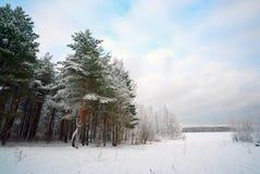 En parque del invierno en un día escarchado Fotos de archivo libres de regalías