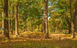 En parque del otoño Foto de archivo