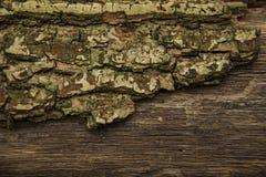 En partie arbre avec la texture d'écorce photographie stock