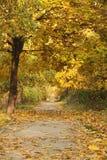 En passage i parkera Royaltyfria Bilder