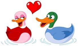 En patos del amor Foto de archivo libre de regalías