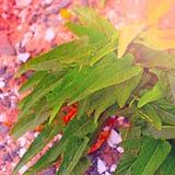 En perenn växt på kiselstenar för ett bakgrundshav Arkivbilder