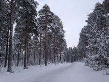 En perfekt vinter arkivfoto