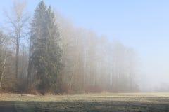 En person som går deras hund på en dimmig dag Fotografering för Bildbyråer