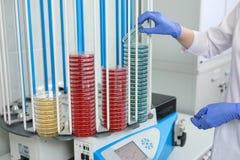 En petri maträtt i händerna av en laborant, ett medicinskt laboratorium Arkivfoto