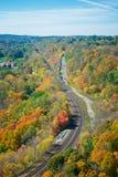 En plats av de färgrika lönnlöven från bergmaximumet Arkivfoto