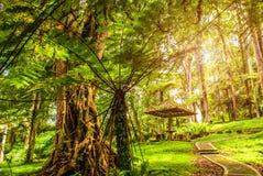 En plats i tropiskt parkerar med regnskogen Royaltyfria Bilder