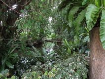 En plats som ser rak in i en tät tropisk regnskog fotografering för bildbyråer