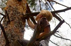 En pojke klättrar ett träd Arkivfoto
