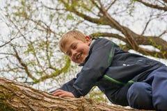 En pojke klättrar trädet royaltyfri foto