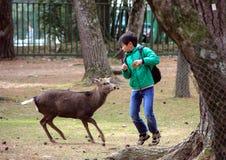 En pojke och deers i Nara Park Kall i Japan Arkivfoton