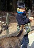 En pojke och deers i Nara Park Kall i Japan Arkivbild