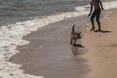 En pojke spelar med hans hund på kusten arkivfoto