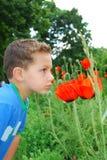 En pojke står nära blommavallmo. Arkivfoto