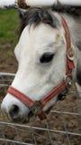 En ponny bak staketet Royaltyfria Bilder