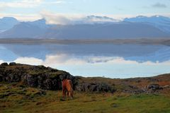 En ponny reflekterar fotografering för bildbyråer