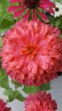 En pop av färg Royaltyfri Fotografi