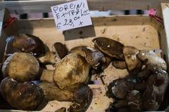 En porcinichampinjonbröstkorg på den lokala marknaden royaltyfri bild