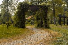 En port mycket av gröna blad Royaltyfri Foto
