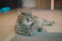 En porträttering av en katt i rummet fyllde med mjukt ljus och använder en mjuk fokus Den huvudsakliga fokusen är på ögonen, meda Arkivfoto