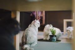 En porträttering av en katt i rummet fyllde med mjukt ljus och använder en mjuk fokus Den huvudsakliga fokusen är på ögonen, meda Arkivbilder