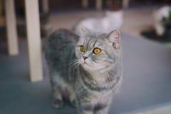 En porträttering av en katt i rummet fyllde med mjukt ljus och använder en mjuk fokus Den huvudsakliga fokusen är på ögonen, meda Royaltyfria Foton