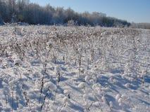 En poudre avec les fleurs et l'herbe de neige Photo stock