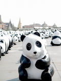 En prålig folkhop av 1600 pandor Royaltyfri Foto