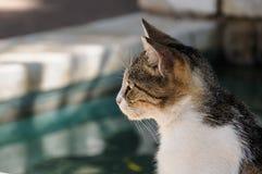 En profilsikt av en katt Arkivbild