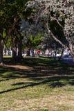 En promenad i parkera Arkivfoto
