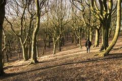 En promenad till och med träna på den Tandle kullen, större Manchester Arkivfoto