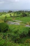 Sjösidalantgård -- Lodlinje Royaltyfri Bild